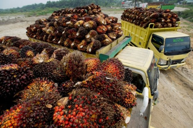 Eagle High Plantations Rombak Jajaran Direksi