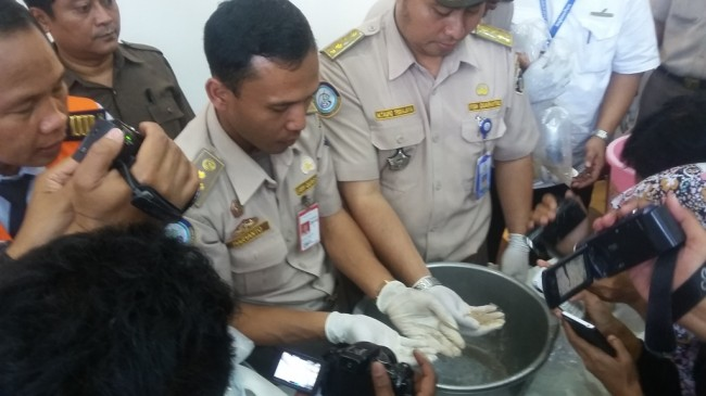 Rentan Mati, Sultan Gagal Lepasliarkan Bibit Lobster Ilegal