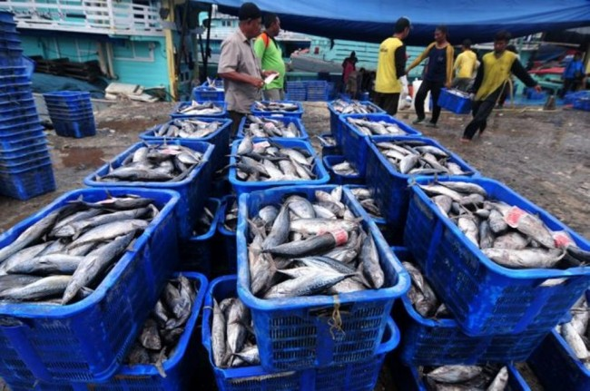 Govt Policies Succeed to Resurrect National Fishery Industry
