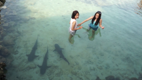 Playing With Sharks in Karimunjawa