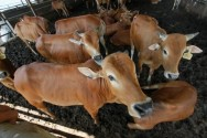 Australian Investors to Build USD200 Million Livestock Port