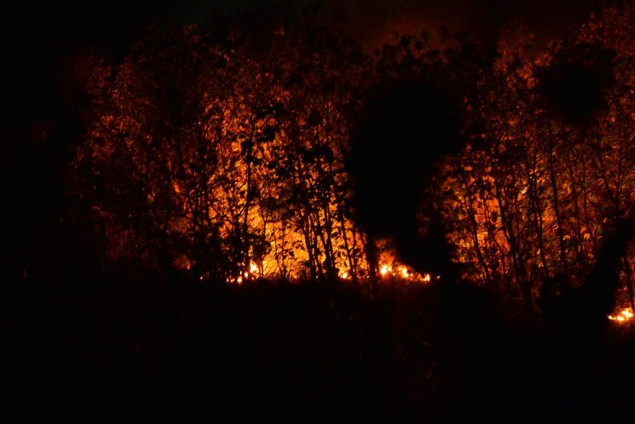 East Java Creates Task Force to Tackle Forest Fires