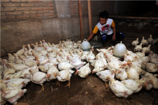 12 Poultry Companies Guilty of Cartel Practices