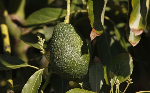 3 Tips to Eat Avocado When on a Diet
