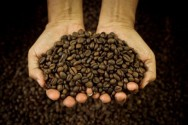 Coffee Can Strengthen Your Memory