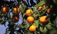 Orange Contains These 4 Nutrients