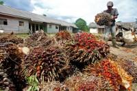 European Parliament Members Visit Indonesia, Discuss Palm Oil