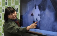 Panda Watch: Tokyo Zoo Says New Cub in Good Health