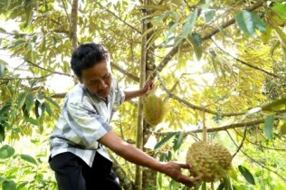 Tips on Consuming Durian