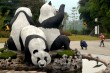 Indonesia to Receive 2 Giant Pandas from China This Month