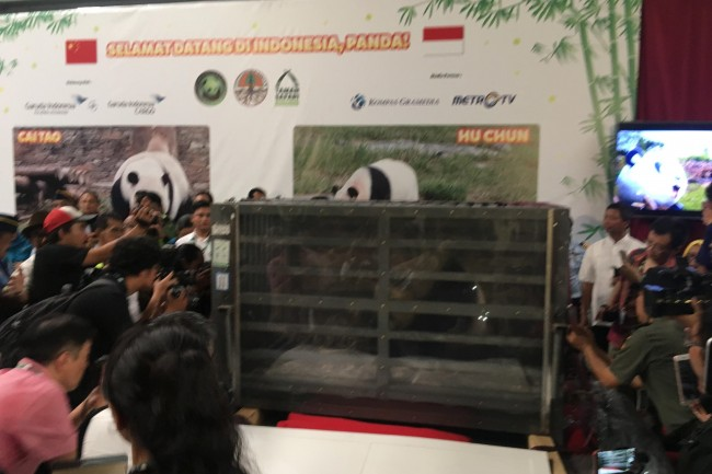 Two Giant Pandas Arrive in Indonesia
