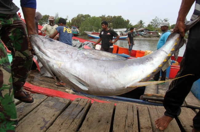 Bali's Tuna Export shot up to USD150.5 Million