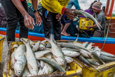 Southeast Sulawesi Fish Quarantine Agency and Quality Control (BKIPM) has planned to set up a forum to increase the province's fishery exports (Photo: Antara).