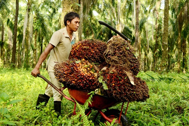 Govt Committed to Counter Negative Campaigns against Palm Oil