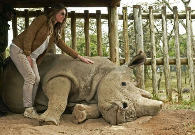 Sudan, the World's Last Male Northern White Rhino, Dies Aged 45