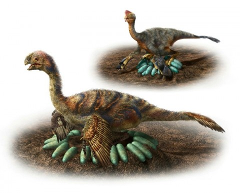 Feathered carnivores called oviraptorosaurs did not sit directly on their eggs, so as not to crush them, a new study found. (Photo:AFP/Nagoya University/Masako Hattori)