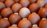 An Egg a Day May Keep the Doctor Away, Study Claims