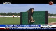 Russia Military Dog Training
