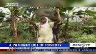 Cocoa Farming Helps Nigerians Move Out of Poverty