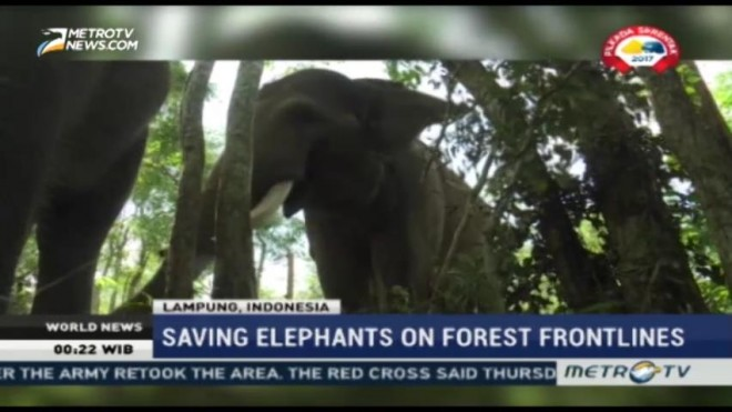 Saving Sumatran Elephants on Forest Frontlines