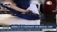 Animals Trained to Cooperate for Medical Care