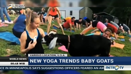 New Yoga Trends: Baby Goats