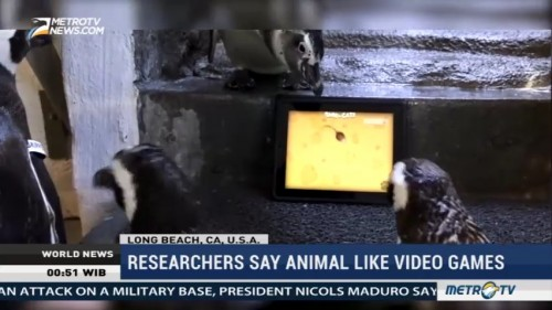 Researchers Say Animal Like Video Games