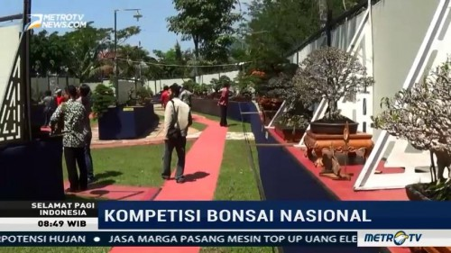 Keseruan Kompetisi Bonsai Nasional di Semarang