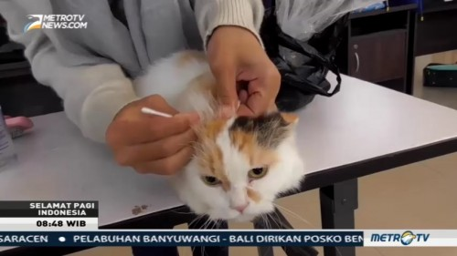 Puluhan Pecinta Kucing Ramaikan Sungailiat Cat Festival 2017