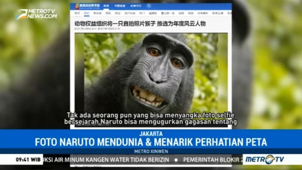 Monyet Selfie asal Indonesia Jadi <i>Person of The Year</i> versi PETA