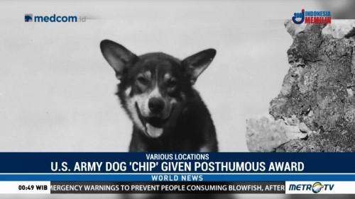 US Army Dog Given Posthumous Award