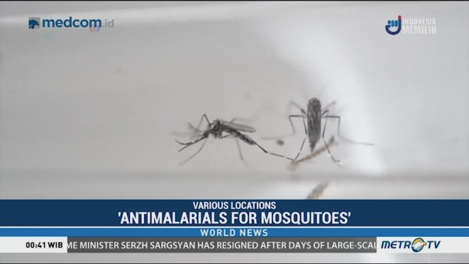 Scientist Calls for 'Antimalarials for Mosquitoes' to Fight Killer Disease