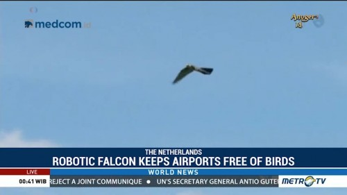 Robotic Falcon Keeps Airports Free of Birds