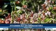 Fifth Graders Help Save Monarch Butterfly
