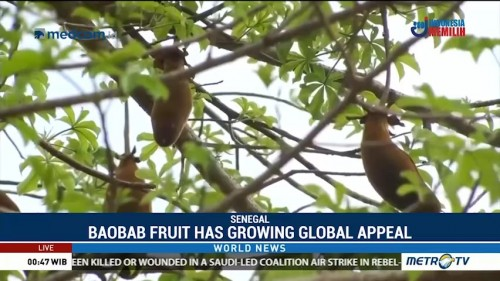 Fruit of African Baobab Tree Has Growing Global Appeal