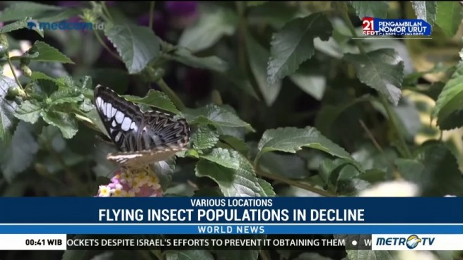 Flying Insect Populations in Decline