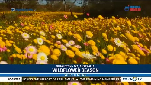 Wildflower Season in Australia