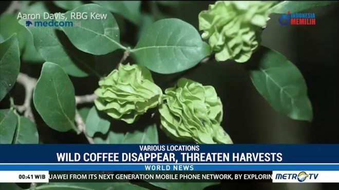 Wild Coffee Disappearing, Threatening Future Harvests