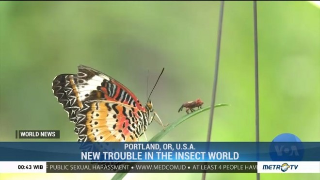 New Trouble In The Insect World